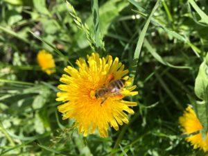 IMG_0962-300x225 Imkerei in Sulden - Die Welt der Bienen